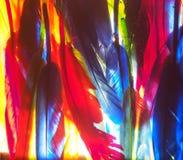 红色,绿色,黄色,蓝色羽毛 背景照片 库存照片