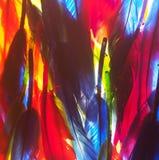红色,绿色,黄色,蓝色羽毛 背景照片 图库摄影