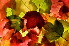 红色,绿色和金子秋天(秋天)留下背景纹理 库存照片