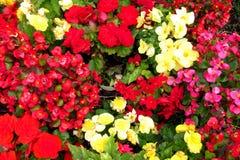 红色,黄色和紫罗兰色花纹理 库存图片