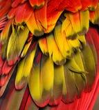 红色,黄色,橙色羽毛 图库摄影