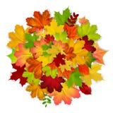 红色,黄色,橙色,绿色秋天叶子背景 免版税库存照片