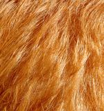 红色头发 免版税库存照片