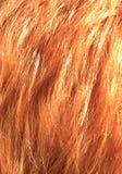 红色头发 免版税图库摄影