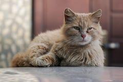 红色头发CAT 免版税库存照片