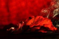 红色离开与红色和烟各种各样的树荫  免版税库存照片