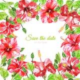 从红色水彩木槿花的框架 免版税图库摄影