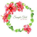 从红色水彩木槿花的框架 库存图片