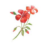 红色水彩花 皇族释放例证