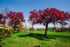 红色结构树 库存图片