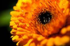 红色/橙色花特写镜头在红色/橙色花庭院/宏指令里在森林里 免版税库存图片