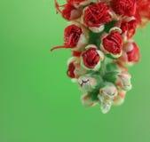 红色洗瓶刷花 图库摄影
