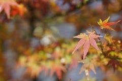 红色绿色叶子在秋天 免版税库存图片