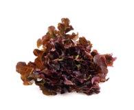 红色莴苣,在白色背景的赤栎叶子 免版税库存图片