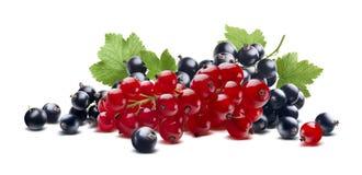 红色黑醋栗莓果在白色背景分支隔绝 图库摄影