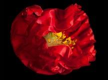 红色 免版税图库摄影