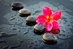 红色adenium花和温泉石头健康的。 库存图片