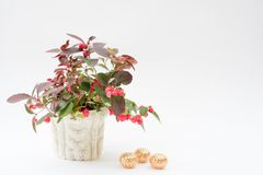 红色beriies和圣诞装饰 图库摄影