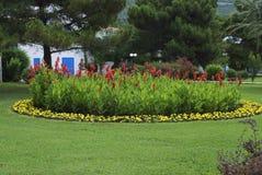 红色Canna coccinea和黄色Tagetes patula在花圃 库存照片