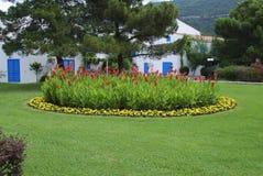 红色Canna coccinea和黄色Tagetes patula在花圃 免版税库存照片