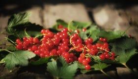 红色currabt莓果 免版税库存照片