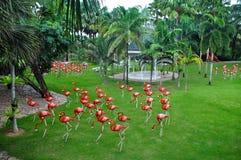 红色flaminggos 免版税库存图片
