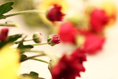 红色Flowe 库存图片