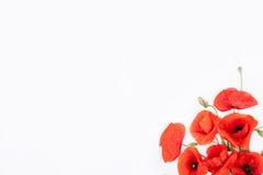 红色popies头在白色背景的基于角落 图库摄影