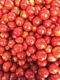 红色Tomato's 免版税库存图片