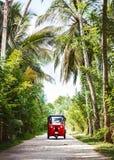 红色tuk-tuk在乡下公路的棕榈树下 库存图片