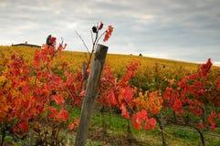 红色Wineyards在托斯卡纳, Chianti,意大利 免版税库存照片