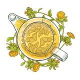 红花茶传染媒介例证 库存照片