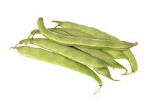 红花菜豆 免版税库存图片