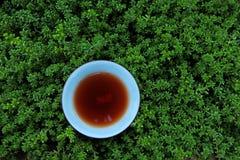 红茶杯子多汁植物背景没人 免版税库存图片