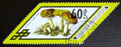 红茹属Flama rom采蘑菇,系列,大约1978年 库存照片