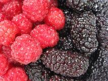 红草莓和黑暗的桑树 杨yin 库存照片