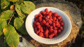 红草莓板材在木背景的根据太阳 免版税库存图片