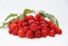 红草莓 库存照片