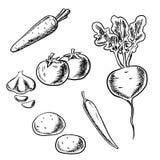 红萝卜、蕃茄、甜菜、土豆、胡椒和大蒜 免版税库存照片