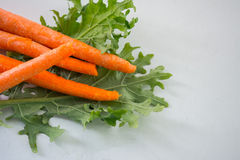 红萝卜和无头甘蓝 库存照片