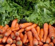 红萝卜和莴苣 库存图片