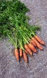 红萝卜新鲜从庭院冠上土 免版税库存照片