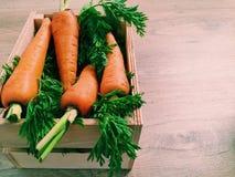 红萝卜美丽的射击在一个木箱的 免版税库存图片