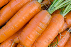 红萝卜菜园 图库摄影