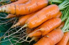 红萝卜菜园 免版税图库摄影
