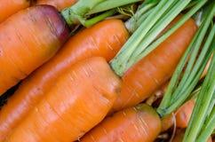 红萝卜菜园 库存图片