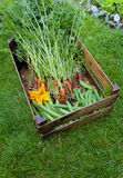 红萝卜蚕虫香豌豆花和绿皮胡瓜花 库存照片