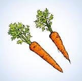 红萝卜 得出花卉草向量的背景 免版税图库摄影