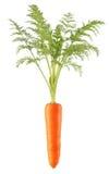 红萝卜 免版税库存照片