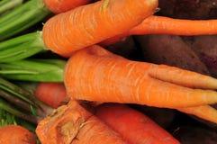 红萝卜 免版税库存图片